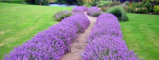 Любимые растения для сада